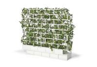 AA-greenwall